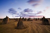 The limestone pillars of the Pinnacles Desert at dawn.  Nambung National Park, Cervantes, Western Australia, AUSTRALIA.