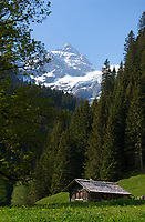 CHE, SCHWEIZ, Kanton Bern, Berner Oberland, Rosenlauital: Almhuette vor schneebedeckten Bergen der Berner Alpen - Dossen und Rosenlauigletscher | CHE, Switzerland, Bern Canton, Bernese Oberland, Rosenlaui valley: alpine pasture hut and snow covered Bernese Alps - Dossen mountain and Rosenlaui Glacier