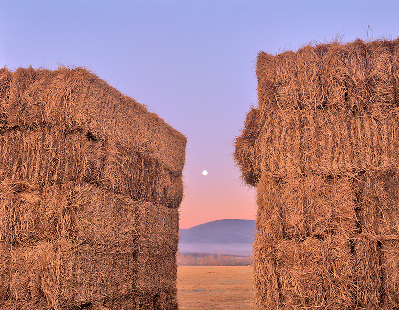 Hay with fog and moon. Near Alpine, Oregon