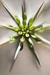 A close-up of succulent.