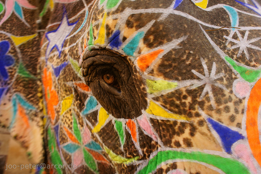 painted elephant taking a close look on the photographer. The magic eyes of the elephant  are brilliantly emphazised by the colourful  painting