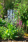 Shallow focus garden vignette of leafy greens and purple salvia blossoms in the early morning sunlight, backed by an old, weathered, sky blue painted Adirondack chair used as garden art, in an organic kitchen garden of mixed vegetables and flowering herbs on Vashon island in Washington State's Puget Sound.