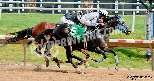 Russian Greek winning at Delaware Park on 6/26/13