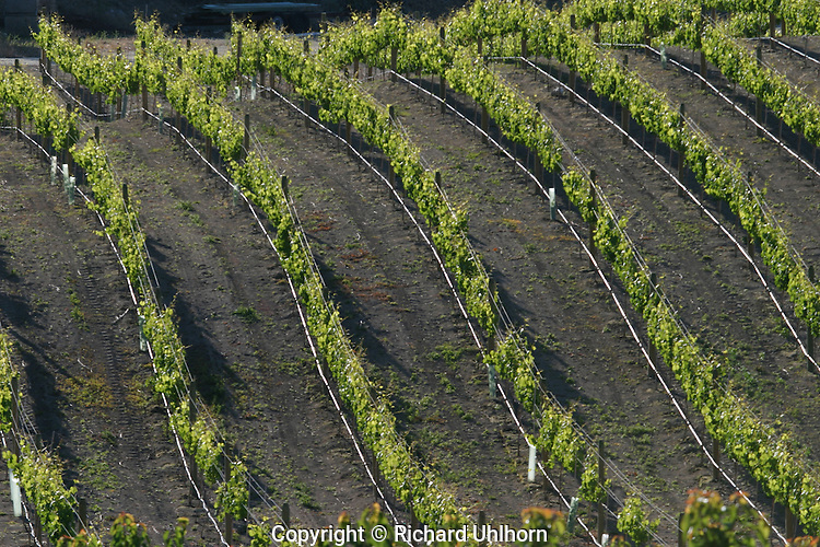 Grape vineyards have replaced many apple orchards in the Lake Chelan Valley which has now been certified as an AVA (American Viticultural Area).