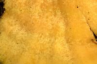 chicken of the woods<br /> Laetiporus sulphureus