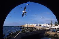 Afrique/Afrique du Nord/Maghreb/Maroc/Essaouira : La cité vue depuis les remparts de la Skala du port