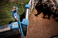 Dec. 14, 2011 - Yopal, Colombia. A llanero (cowboy) directs cattle in the yard. © Nicolas Axelrod / Ruom