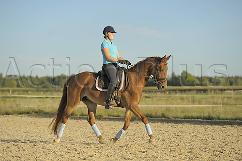 29 09 2011. Germany.  Trotting at a Dressage Equestrian sports  event.  Model Released