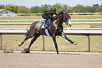 #140Fasig-Tipton Florida Sale,Under Tack Show. Palm Meadows Florida 03-23-2012 Arron Haggart/Eclipse Sportswire.