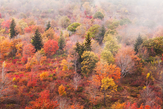 Autumn color and fog, Graveyard Field, Blue Ridge Parkway