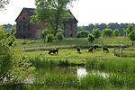 POLAND, Juchowo, organic milk cow farm, pasture land / POLEN, Juchowo, biologisch wirtschaftender Milchviehbetrieb, artgerechte Weidehaltung