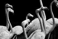 Flamingos, 35mm Ilford Delta Film