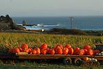 Pumpkins near Davenport