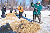 A crew of volunteers rake the used straw shortly after a team leaves at the Galena checkpoint & making room for the next dog team to park during the 2010 Iditarod