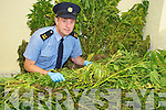 Garda Sean O'Regan, Kenmare, pictured with some of the Cannabis haul worth in the region of EUR150, 000 which was found in the Kenmare area on Thursday..