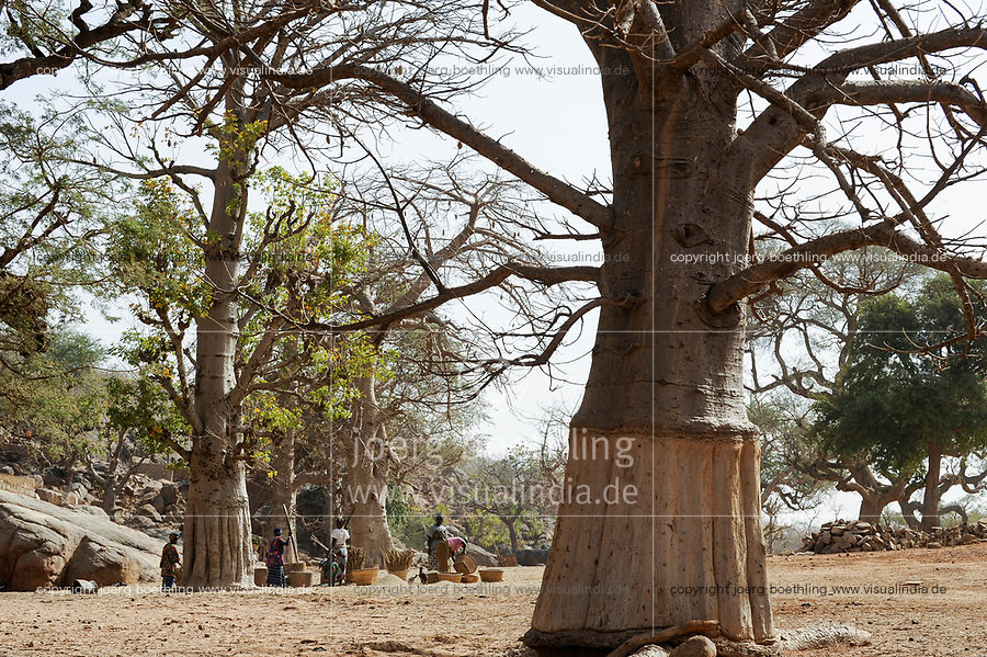 MALI,  Bandiagara, Dogonland, habitat of the ethnic group Dogon, Dogon village with Baobab trees, women pound millet