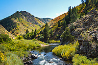 The South Platte River winds its way through Waterton Canyon in Colorado as the the first hint of Autumn's foliage change starts to show itself.