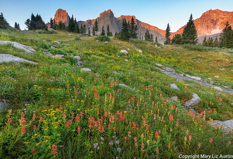 Wind River Range, WY: Sunrise on Warrior Peaks and War Bonnet Peak from a field of alpine wildflowers; Cirque of the Towers; Popo Agie Wilderness; Shoshone National Forest