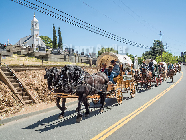 Days of '49 wagon train pass along North Main Street by St. Sava Church, jackson, Calif.