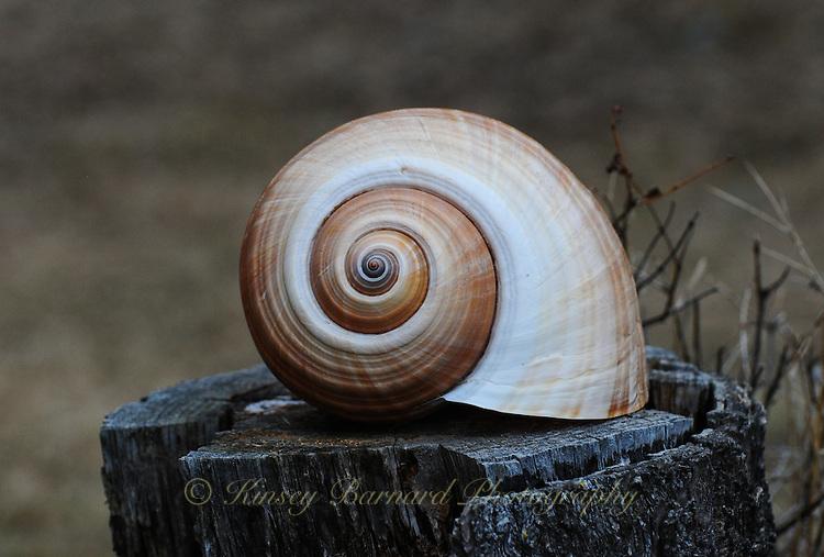 Seashell designs