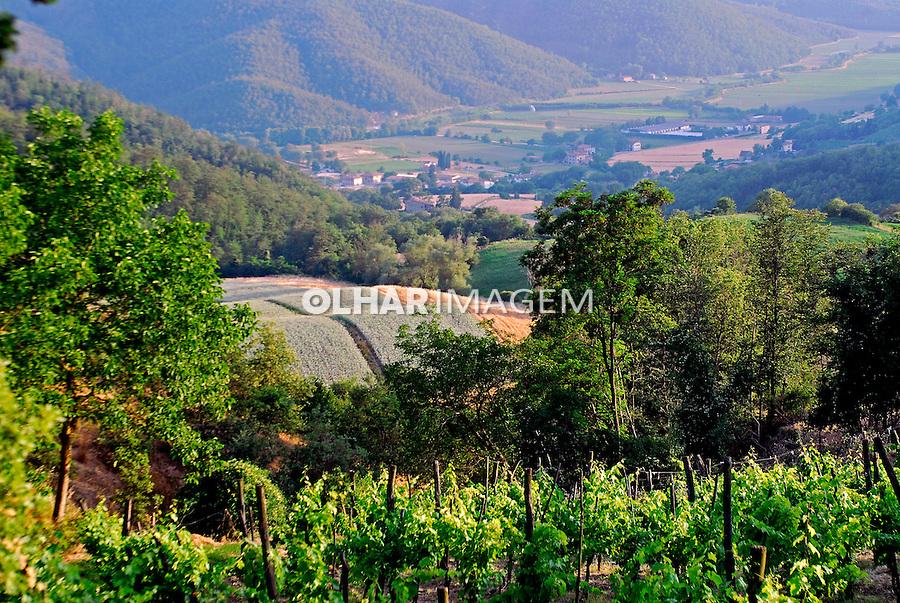 Pequeno vinhedo em Citta diCastello. Umbria. Itália. 2006. Foto de Luciana Whitaker.