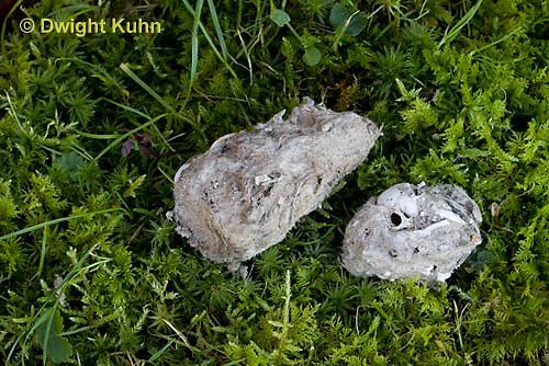 OW09-514z  Owl Pellet with animal bones inside, Great Horned Owl