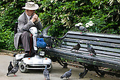 Elderly Man with pigeons on mobility scooter in London's Regent's Park