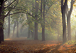 Europe, DEU, Germany, Magdeburg, Autumn, Forest, Fog, Sunrise....[ For each utilisation of my images my General Terms and Conditions are mandatory. Usage only against use message and proof. Download of my General Terms and Conditions under http://www.image-box.com or ask for sending. A clearance before usage is necessary...Material is subject to royalties. Each utilisation of my images is subject to a fee in accordance to the present valid MFM-List...Contact | archive@image-box.com | www.image-box.com ]