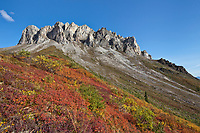 Blueberry and autumn tundra at the base of Snowden mountain, Brooks Range mountains, Arctic, Alaska.