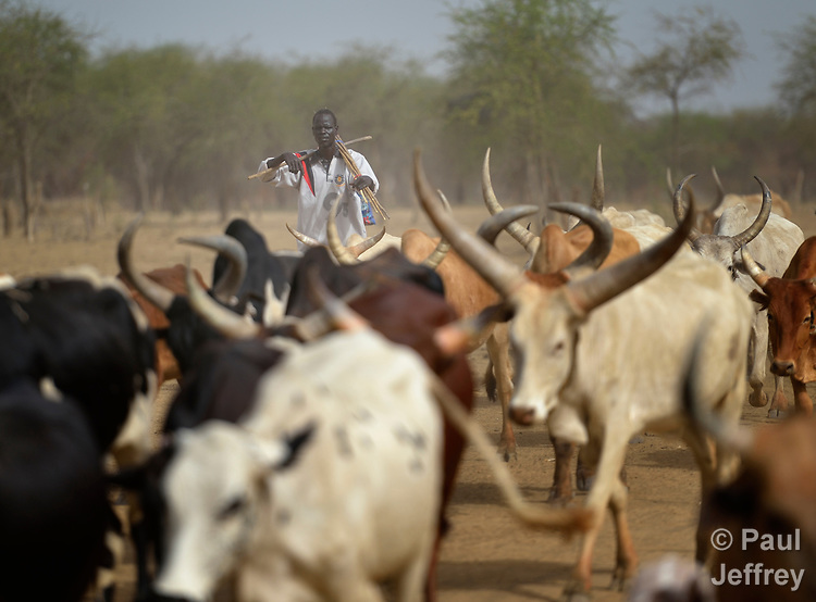 A Dinka Ngok cattle herder drives his herd southward in the contested Abyei region along the border between Sudan and South Sudan. Fearful of incursions by Misseriya nomads from the north, he and other residents are fleeing south to avoid violent confrontations. Residents of the area also fled south in 2011 after a prolonged attack by soldiers and militias from the northern Republic of Sudan. Although the 2005 Comprehensive Peace Agreement called for residents of Abyei--which sits on the border between Sudan and South Sudan--to hold a referendum on whether they wanted to align with the north or the newly independent South Sudan, the government in Khartoum and the northern-backed Misseriya, excluded from voting as they only live part of the year in Abyei, blocked the vote and attacked the majority Dinka Ngok population. The African Union has proposed a new peace plan, including a referendum to be held in October 2013, but it has been rejected by the Misseriya and Khartoum. The Catholic parish of Abyei, with support from Caritas South Sudan and other international church partners, has maintained its pastoral presence among the displaced and assisted them with food, shelter, and other relief supplies.