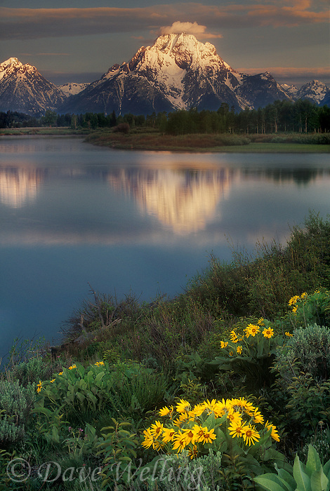 749451024 sunrise lights up mount moran and the teton range with flowering arrowleaf balsamroot balsamorhiza sagittata wildflowers flowering in the foreground along the oxbow bend of the snake river in grand tetons national park wyoming