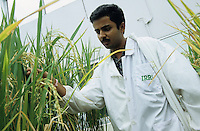 PHILIPPINES, IRRI international rice research institute est. by Ford and Rockefeller Foundation in Los Banos near Manila , trial field in greehouse with Golden Rice, a GMO crop with vitamin A betacarotin, indian scientist, vitamin A deficiency mostly affects women and children – causing sickness, blindness, and even death / PHILIPPINEN, indischer Forscher im Gewaechshaus am IRRI, Internationale Reisforschungsinstitut in Los Banos, Entwicklung von Genmanipuliertem Reis mit eingesetztem Vitamin A und Betacarotin, auch Goldener Reis genannt