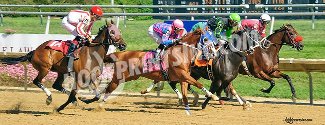 Twocubanbrothersu winning at Delaware Park on 8/25/15