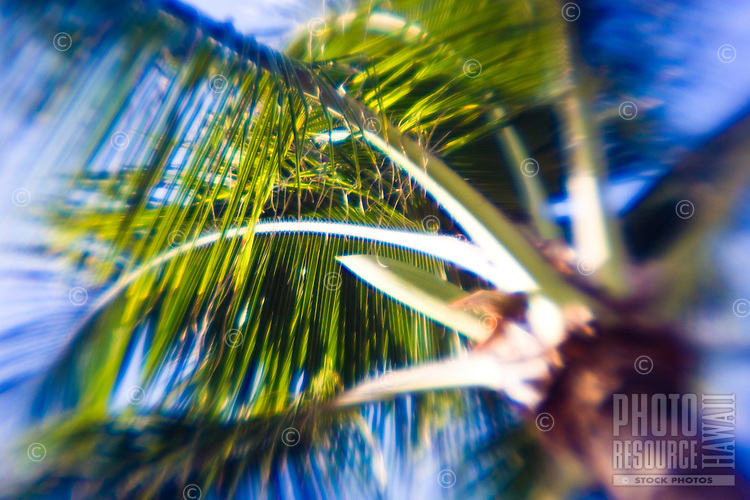 Coconut tree fronds blowing in the wind. Soft edged photo gives vintage feel.