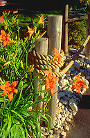 Tiger lilies at gatepost at restaurant with fish boil.  Door County Wisconsin USA