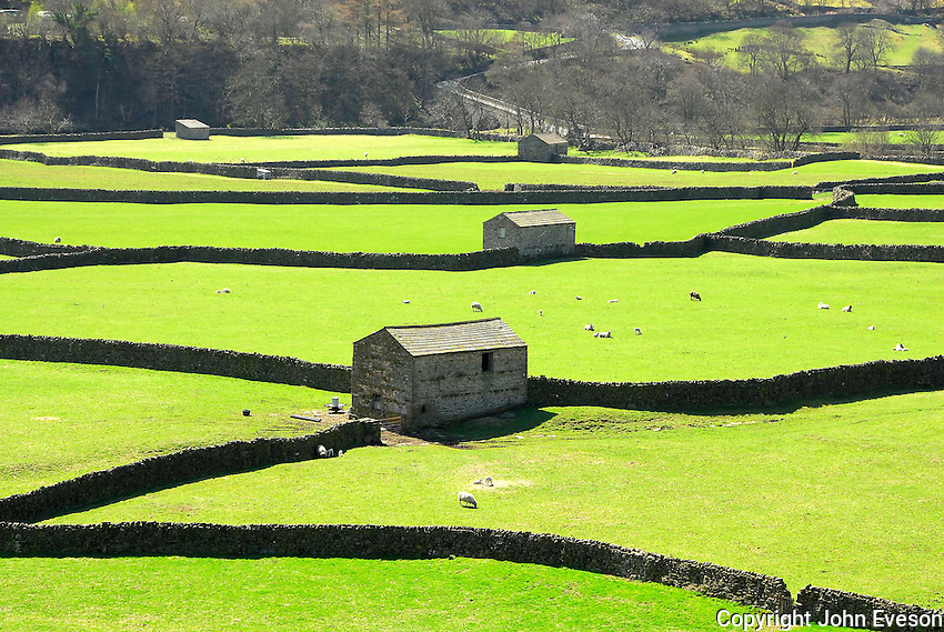 Stone barns near Gunnerside, North Yorkshire. View.