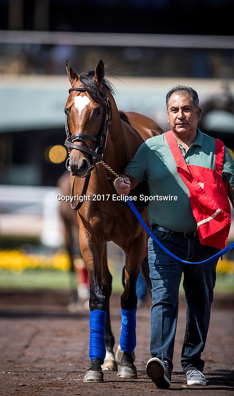 ARCADIA, CA - JUNE 03:  Heart to Heart before the Shoemaker Mile Stakes at Santa Anita Park  on June 03, 2017 in Arcadia, California. (Photo by Alex Evers/Eclipse Sportswire/Getty Images)
