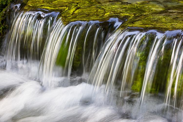 Fern Springs, Yosemite National Park, California