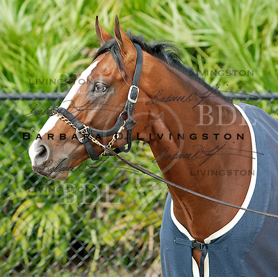 Palm Meadows Training Center 2-27-12 morning after Fountain of Youth