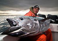 The large open mouth is another sign of the size of the fish, and this is not even a Giant Bluefin, just a regular 150 pounder, an average fish. Thus is a great challenge when chased with rod and reel on top water lures