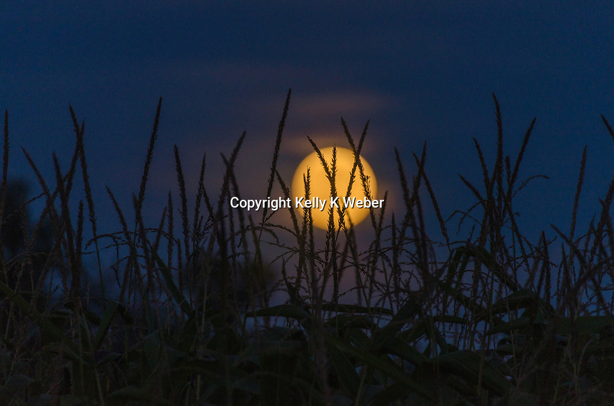 Super Moon rising over a cornfield in September