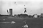Urban Seagulls  looking for food the east end of London 1970s UK
