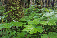 Tongass National Forest, Southeast, Alaska