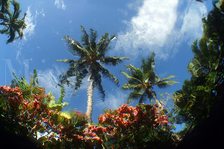 This view of palm trees and garden beside a pool, was taken from the bottom of the pool. Hawaii.