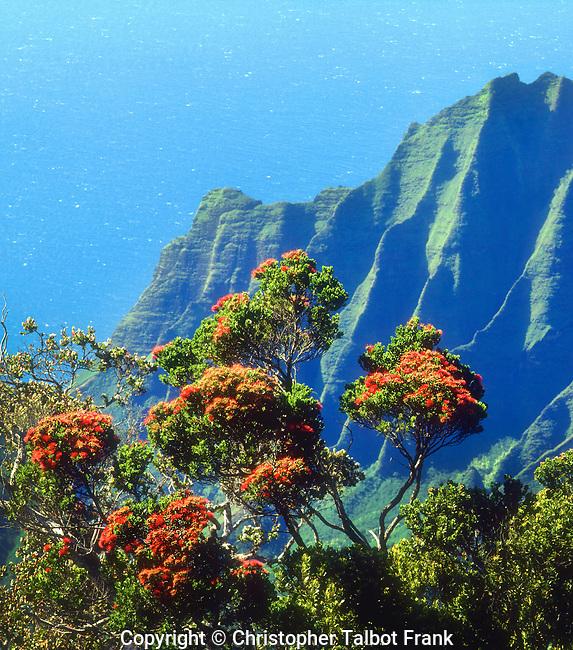 USA; Kauai; Hawaii.; A flowering tree above the Na Pali Coast