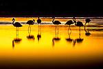 Altiplano, Bolivia , flamingos, Eduardo Avaroa Andean Fauna National Reserve