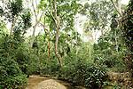 Creek flowing through tropical rainforest, Lope National Park, Gabon