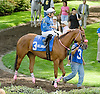 Zesty Brew before The Winter Melody Stakes at Delaware Park on 5/12/12