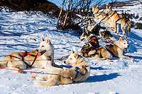 Sweden, Åre. Sled dog racing near Ottsjö.
