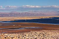 South America, Chile, Salar de Atacama laguna Chaxa, flamingo
